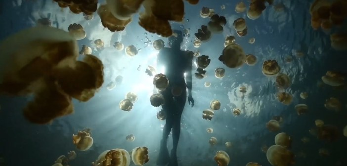 You can swim with millions of jellyfish in this lake