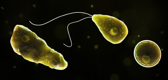 Brain-eating amoebas are spreading—and that's just as bad as it sounds