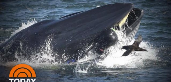 Diver Recounts Almost Being 'Swallowed' Alive By Massive Whale | TODAY
