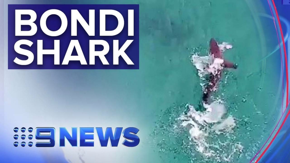 Great white spotted just metres from swimmer at Bondi Beach | Nine News Australia