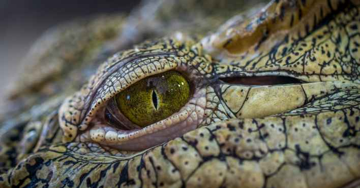 photo of brown and green reptile