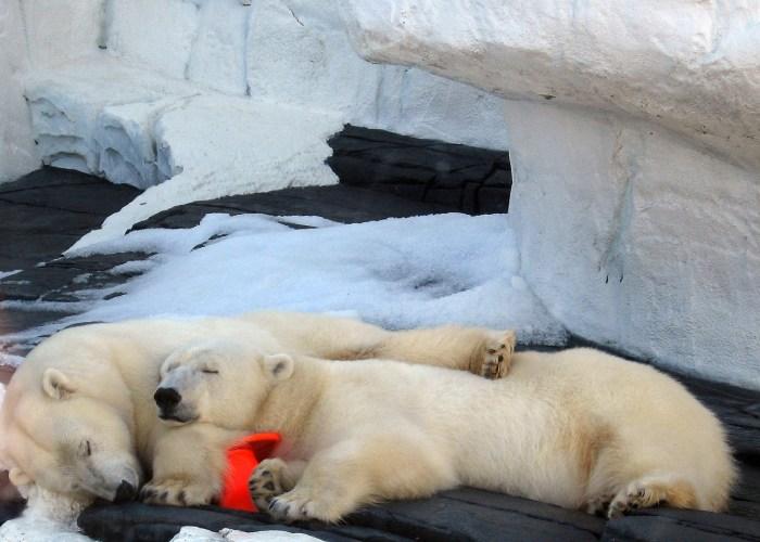 polar-sleep-taper