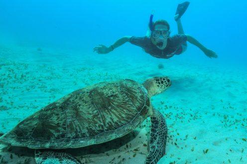 Emma McKeon and turtle