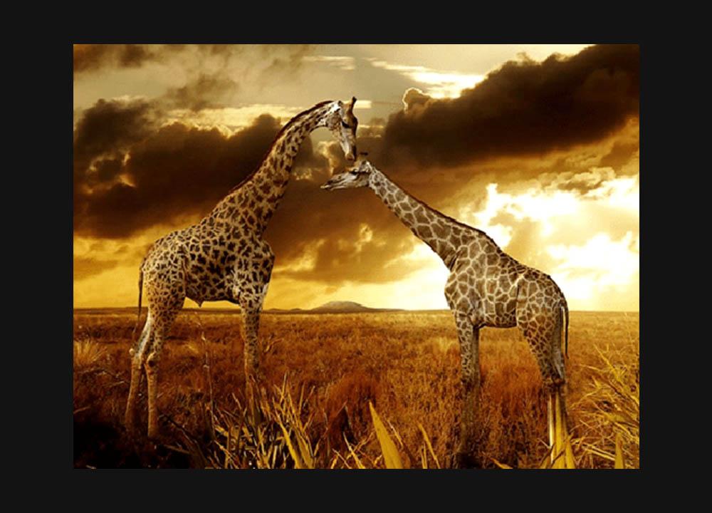 ishof-silent-auction-african-safari