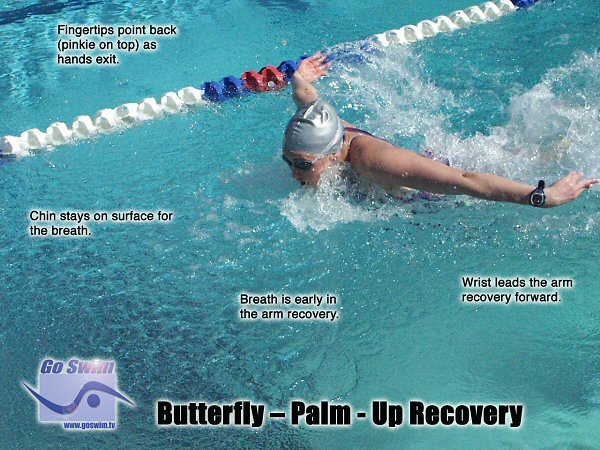 Butterfly: Palm Up Recovery