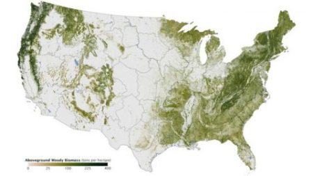 swissmiss   A Map of Every Tree in the United States A Map of Every Tree in the United States