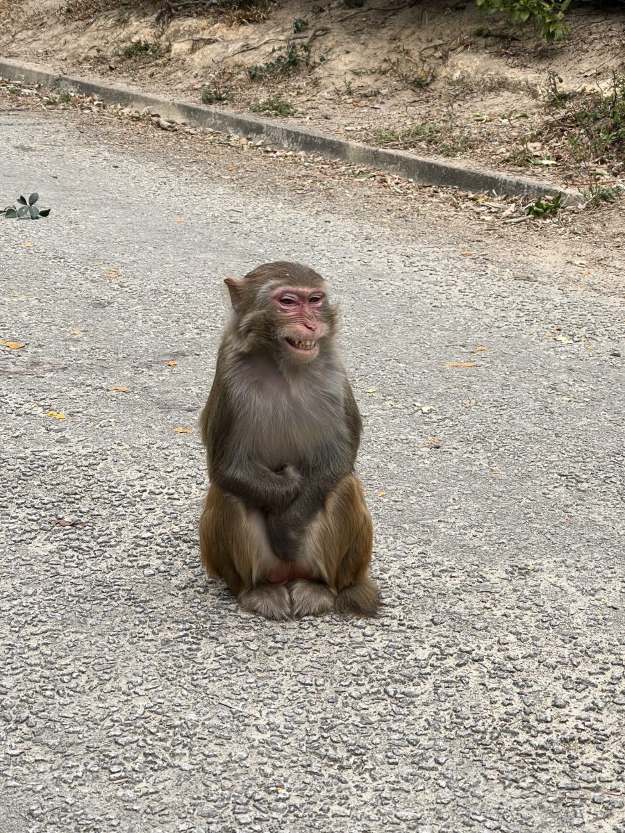 Is this monkey smiling, or just angry? I think it's the second.