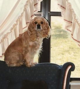 Ginger - 1989