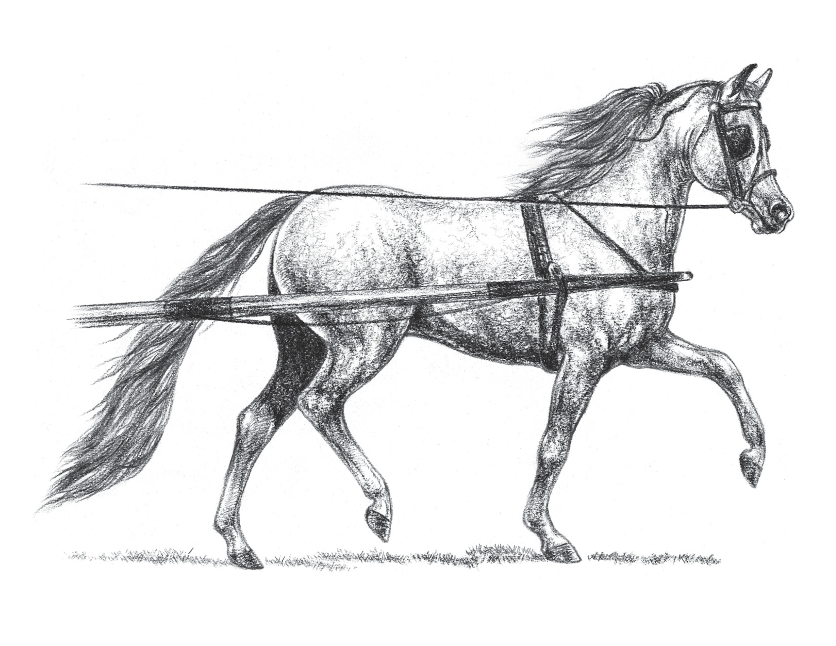 Miniature Horse Driving Fine Art Switzer Studios