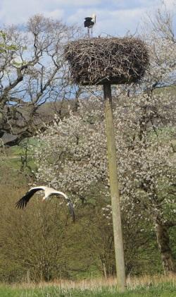 Storkpar