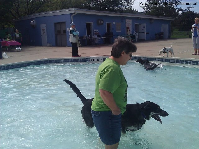 Dogs having fun in the pool!