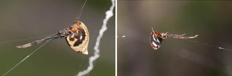 180813-Spider