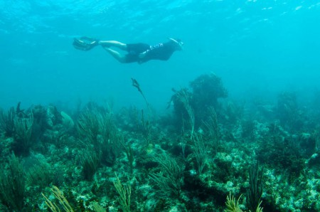 210114-Snorkeling
