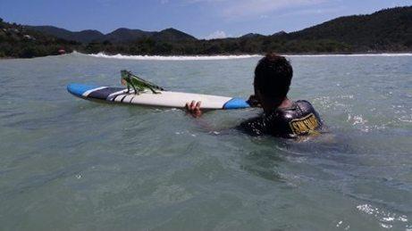 SXM_Surf-Explorer-Iguana surfing, Anse des pères