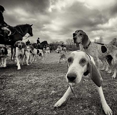 A fox hound's first photo op. ©William Kenner