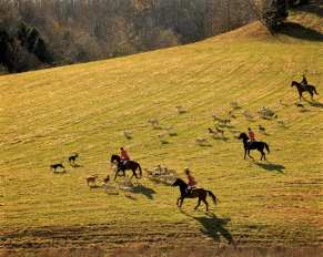 Patterns with hounds and staff leaving a fixture in Marshall County, TN. ©William Kenner
