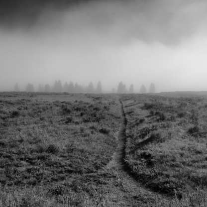 In the Distance ©Carolyn Meltzer