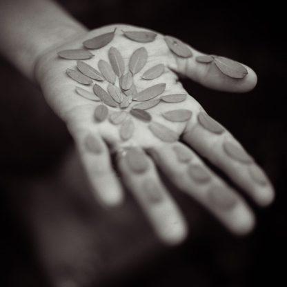 Rebecca's Palm ©Lori Vrba