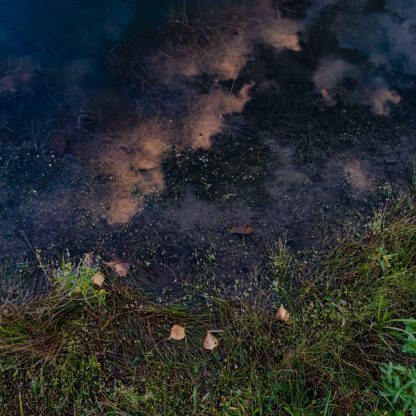 Merino Morning ©Dawn Watson