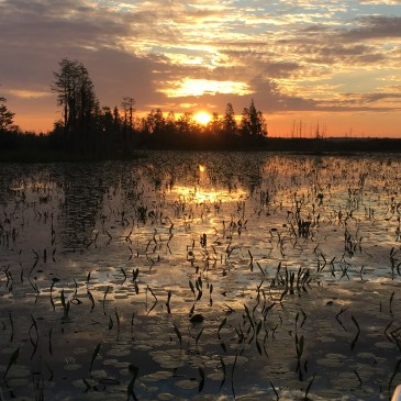 Cumberland Island + Okefenokee Swamp + April Full Moon + Peter Essick Instructing
