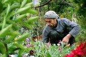مئات الأنواع من الورود والأشجار المثمرة تجتمع في مشتل أبو أيهم بريف إدلب الجنوبي
