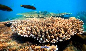 Terumbu Karang Pulau Pari