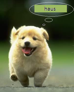 anjing2