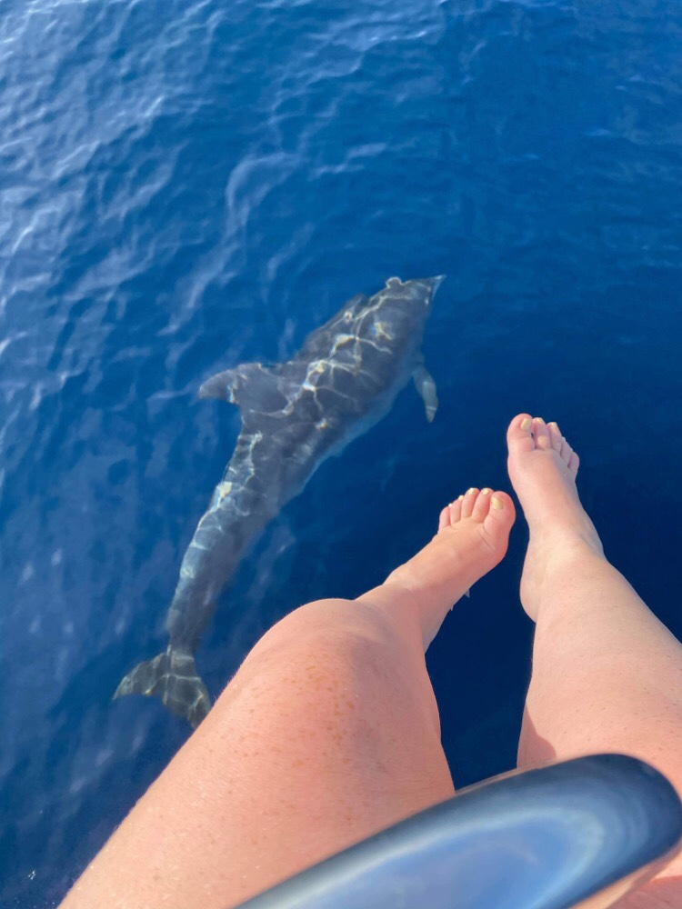Delfiner byder os velkommen til Saint Vincent og Grenadinerne
