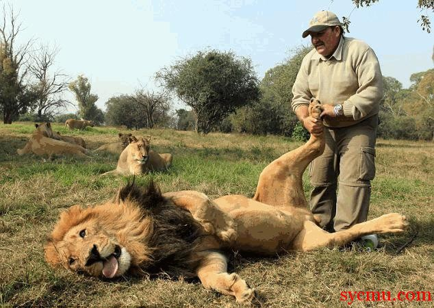 Lion and man are friends