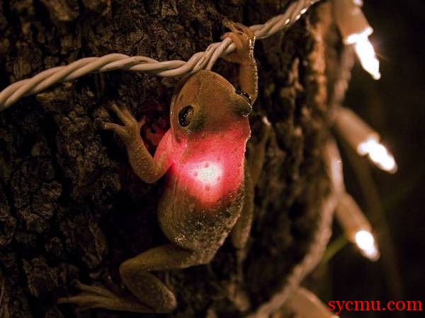 Frog lit up with red lamp