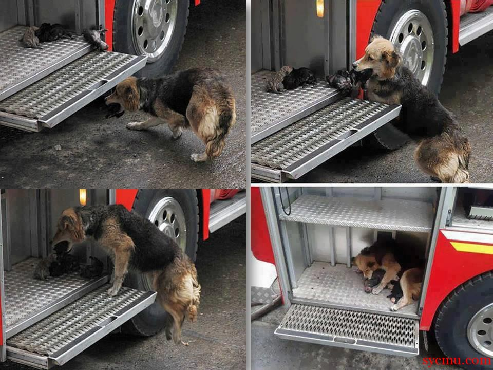dog rescues puppies