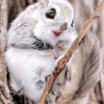 5 Cute Animal Photos to Brighten Your Wednesday