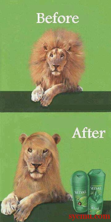 Lion Shampoo Commercial