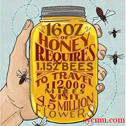 16 oz of honey 1152 bees