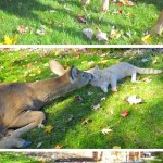 Cat and Deer Playing Friendship