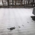 Squirrel footsteps in the snow