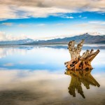 Tree Stump Great Salt Lake Utah