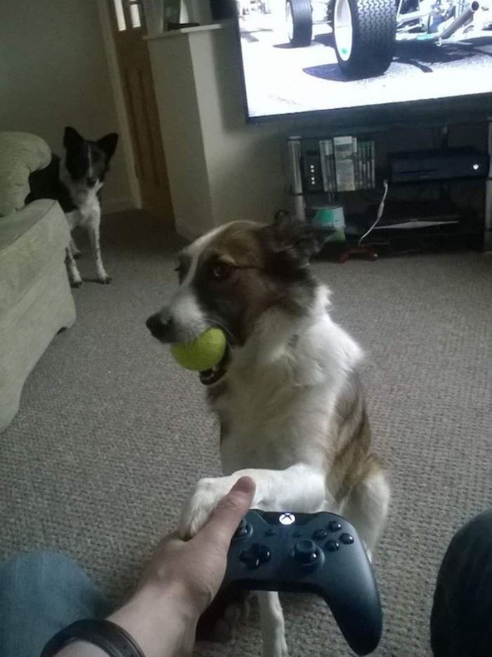 Play with dog instead of PS4