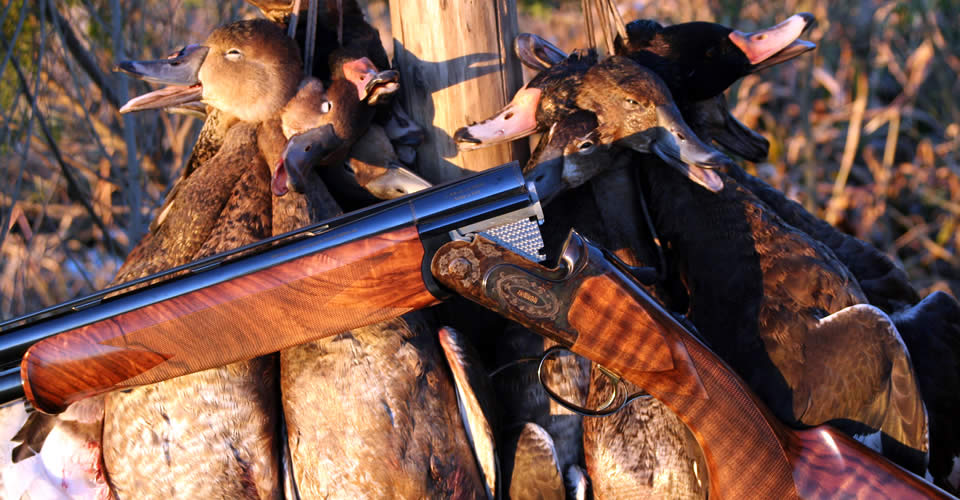 Duck Hunting Argentina