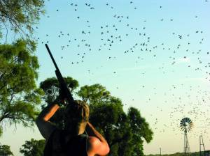 Hunting doves