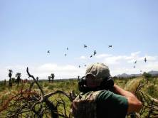 Hunter shooting doves