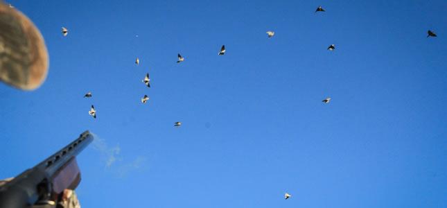 Dove hunting in Córdoba