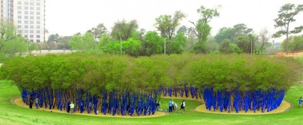 Blue Trees in Houston Texas 620x256