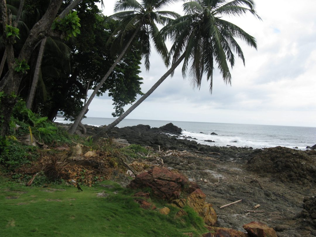 Grass, trees, and rocks by the beach