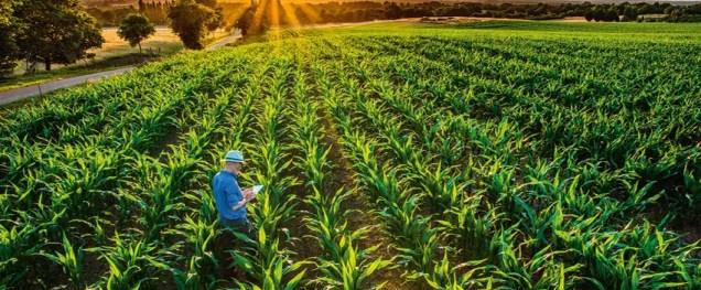 Produtor Rural emitindo Nota Fiscal Produtor Rural