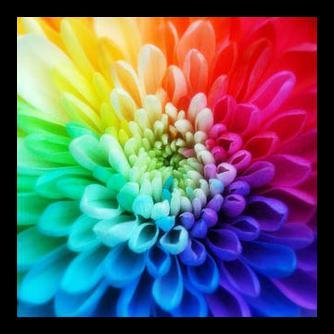 Значение цветов и их роль в жизни человека :: SYL.ru