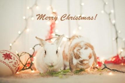 ChristmasBunniesLoRes-003x