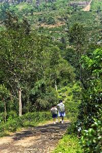 Sri Lanka Ceylan #sylvainlandry #5d3 #5dmarkiii #canon #eos #photographe #photographer #srilanka #asie #asia #travel More photos / en voir plus sur : www.sylvain-landry.com
