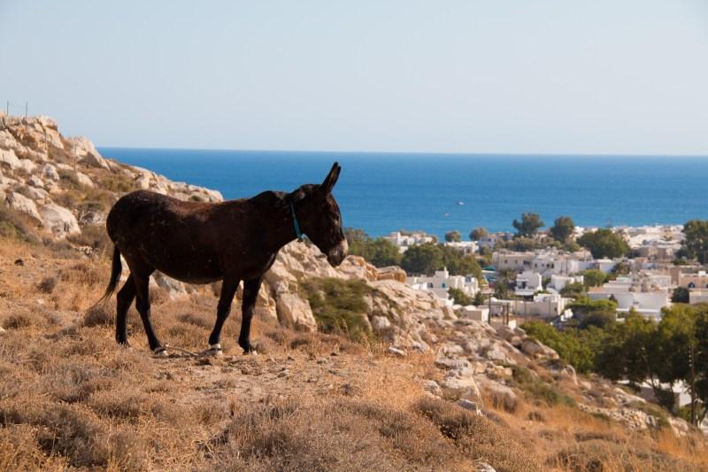 Un petit âne en retrait de Períssa.