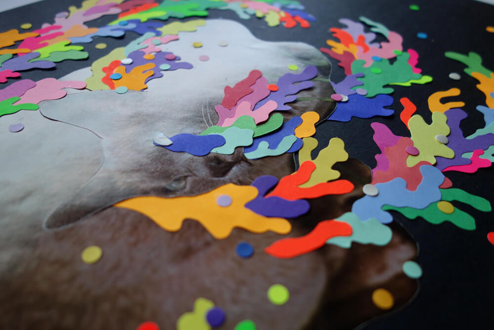 sylvia_stolan_colour_cat_closeup3